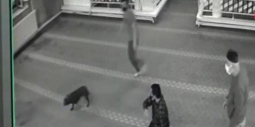 Camiye giren köpek cemaate korkulu anlar yaşattı