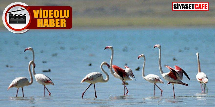 Arin Gölü'ndeki Flamingolar havadan görüntülendi