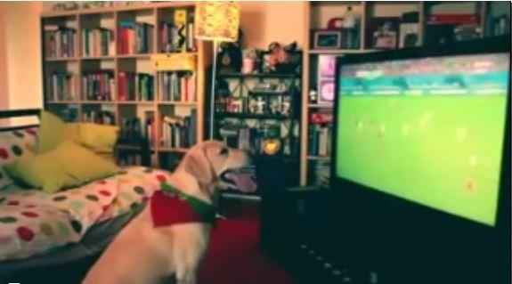 Maç izleyen köpeğin gol sevinci